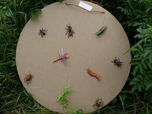 Il n'y avait que 7 insectes.  -  L'araignée et le mille-pattes (scolopendre) n'en sont pas! -  Prise par Nicole Sanschagrin