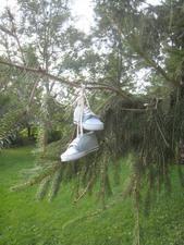 Jardin No 2 Des bottines « pas faciles à trouver » Prise par Inconnu
