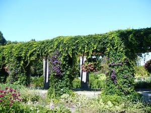 Visite au Jardin botanique de Montréal   Juillet 2008  - Très belle muraille de clématites -  Prise par Nicole Sanschagrin