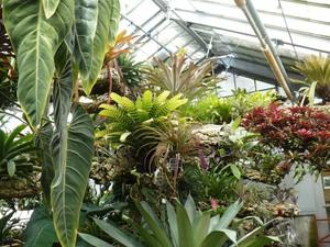 Visite au Jardin botanique de Montréal   Juillet 2008  - Les serres et leurs merveilles tropicales! -  Prise par Nicole Sanschagrin