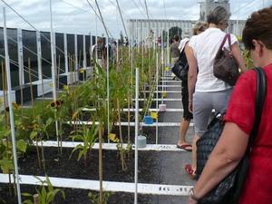Congrès 2008 de la FSHEQ à l'Université Laval - Visite aux « Jardins éphémères » du 400ième de Québec -  Prise par Nicole Sanschagrin