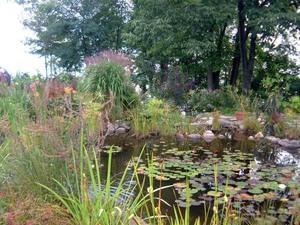 Jardin de Carol Anne et Paul Prise par Un membre de la société d'horticulture