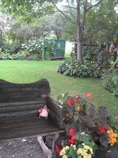 Jardin No 6  Une petite grenouille bien discrète!  Prise par Inconnu