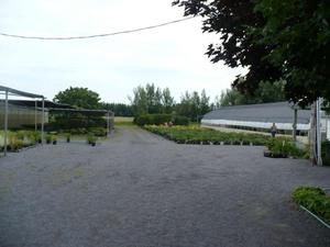 Les Jardins Osiris à St Thomas de Joliette; on pouvait y faire de bons achats Prise par Nicole Sanschagrin