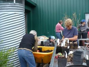 Préparation des plantes du Domaine Joly; dans la bonne humeur! Prise par Nicole Sanschagrin