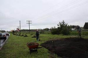 Des bénévoles ont travaillé fort pour préparer le site de plantation. Prise par Laurence  Rivet