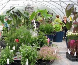 Et voilà le résultat!  Ces  potées fleuries embelliront le Domaine tout l'été. Prise par