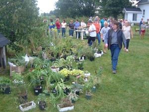 Comme chaque année il y avait un beau choix de plantes (septembre 2003) Prise par Martin Gosselin