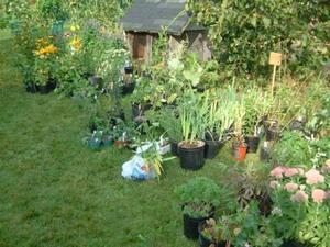 Beau choix de plantes.  Septembre 2004 Prise par Martin Gosselin